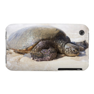Green sea turtle Chelonia mydas) on the beach in Case-Mate iPhone 3 Case