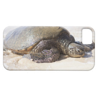 Green sea turtle Chelonia mydas) on the beach in iPhone SE/5/5s Case