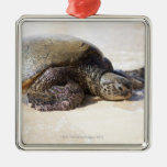 Green sea turtle Chelonia mydas) on the beach in Christmas Tree Ornaments