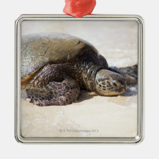 Green sea turtle Chelonia mydas) on the beach in Square Metal Christmas Ornament