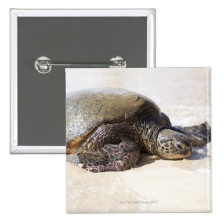 Green sea turtle Chelonia mydas) on the beach in Pinback Button