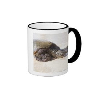 Green sea turtle Chelonia mydas) on the beach in Ringer Mug