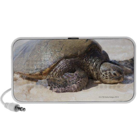 Green sea turtle Chelonia mydas) on the beach in Speaker