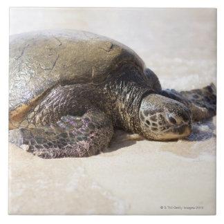 Green sea turtle Chelonia mydas) on the beach in Tiles