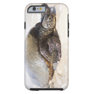 Green sea turtle Chelonia mydas) on the beach in Tough iPhone 6 Case