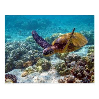 Green Sea Turtle Chelonia Mydas Swimming Postcard
