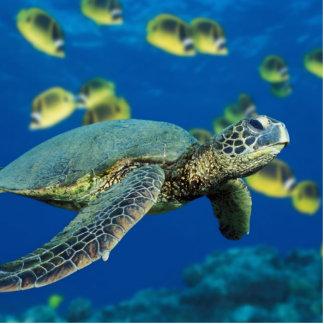 Green Sea Turtle Cutout