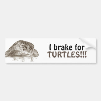 Green Sea Turtle Drawing Bumper Sticker