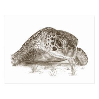 Green Sea Turtle Drawing Postcard