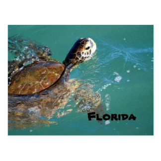 Green Sea Turtle, Florida Postcard