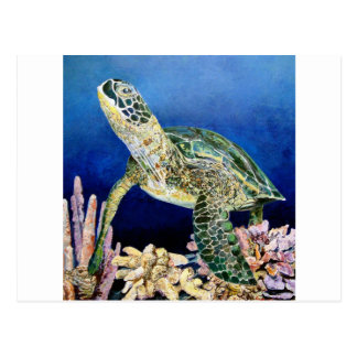 Green Sea Turtle Gazing Postcard