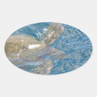 Green Sea Turtle - Hawaii Honu Oval Sticker