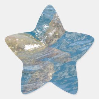 Green Sea Turtle - Hawaii Honu Star Sticker