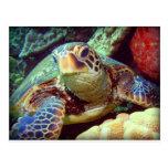 GREEN SEA TURTLE HAWAII POST CARDS