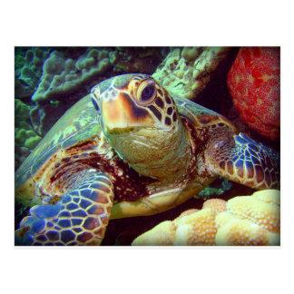 GREEN SEA TURTLE HAWAII POSTCARD