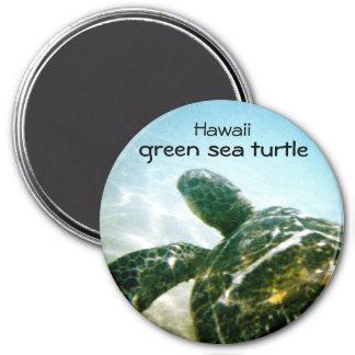Green Sea Turtle Refrigerator Magnets