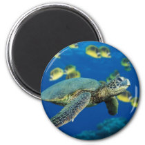 Green Sea Turtle Magnet