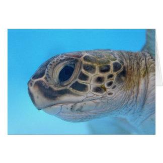 Green Sea Turtle note card
