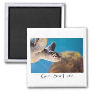 Green Sea Turtle Photograph Magnet