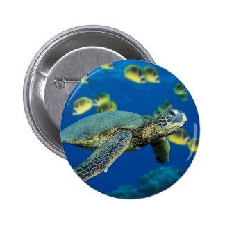 Green Sea Turtle Pins