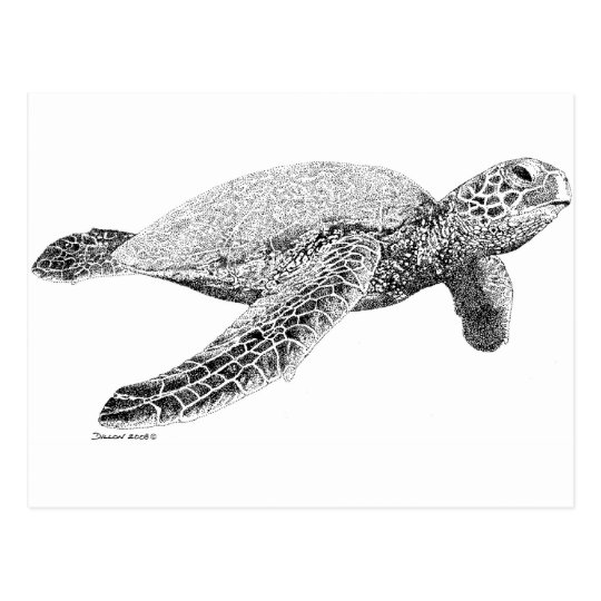 Green Sea Turtle Postcard