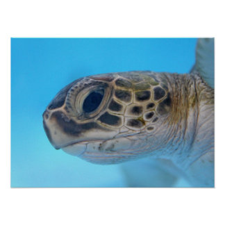 Green Sea Turtle print