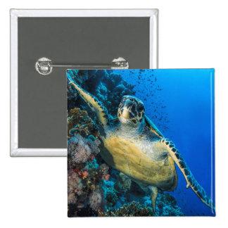Green Sea Turtle | Red Sea Button