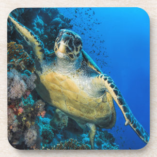 Green Sea Turtle   Red Sea Coaster