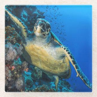 Green Sea Turtle   Red Sea Glass Coaster