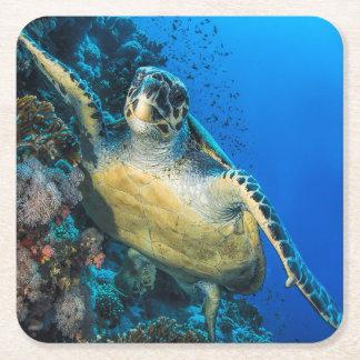 Green Sea Turtle   Red Sea Square Paper Coaster