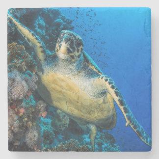 Green Sea Turtle   Red Sea Stone Coaster