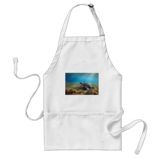 Green sea turtle relaxing underwater adult apron