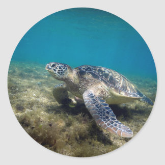 Green sea turtle relaxing underwater classic round sticker