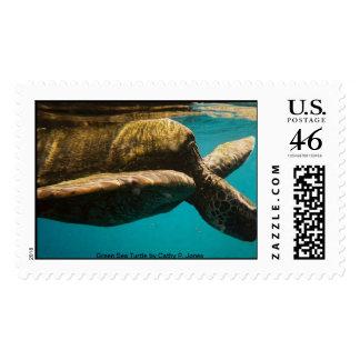 Green Sea Turtle Stamp