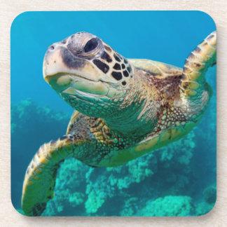 Green Sea Turtle Swimming Over Coral Reef  Hawaii Drink Coaster