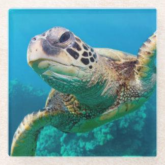 Green Sea Turtle Swimming Over Coral Reef  Hawaii Glass Coaster