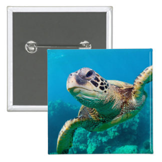 Green Sea Turtle Swimming Over Coral Reef |Hawaii Pinback Button