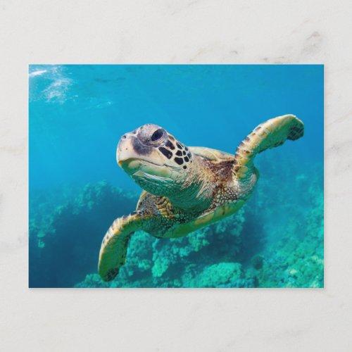 Green Sea Turtle Swimming Over Coral Reef Hawaii Postcard