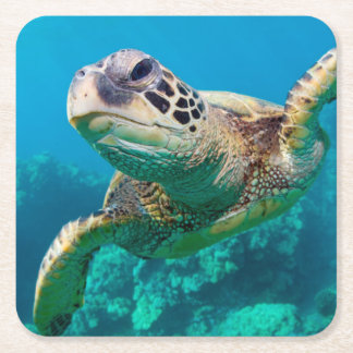 Green Sea Turtle Swimming Over Coral Reef  Hawaii Square Paper Coaster