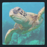 "Green Sea Turtle Swimming Over Coral Reef |Hawaii Stone Coaster<br><div class=""desc"">Sea turtle,  Hawaii</div>"