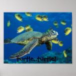 Green Sea Turtle, turtle..turtle! Poster