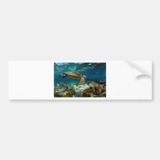 Green sea turtle underwater Galapagos Islands Bumper Stickers