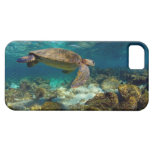 Green sea turtle underwater Galapagos Islands iPhone 5 Cover