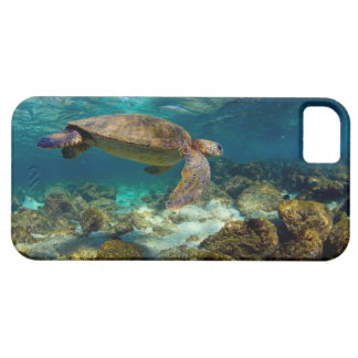 Green sea turtle underwater Galapagos Islands iPhone SE/5/5s Case