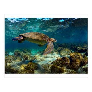 Green sea turtle underwater Galapagos Islands Postcard