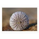 Green sea urchin shell postcard