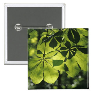 Green Seven Point Leaves with Sun Illumination 2 Inch Square Button