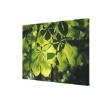 Green Seven Point Leaves with Sun Illumination Gallery Wrapped Canvas