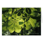 Green Seven Point Leaves with Sun Illumination Card