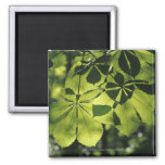 Green Seven Point Leaves with Sun Illumination Refrigerator Magnets